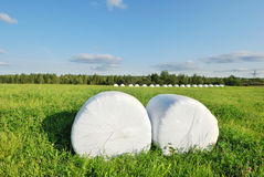 Hay bales. Wrapped in plastic sheet Stock Images