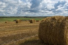 Hay bales. In the field Stock Images