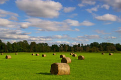 Hay bales. Bales of hay on a green field under a cloudy sky Royalty Free Stock Image
