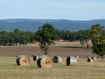 Hay Bales. In the field during summer time around the Grampians National Park, Victoria, Australia Stock Photography