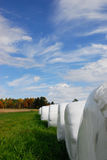 Hay bales. A row of plastic wrapped hay bales in a field in maine Royalty Free Stock Photos