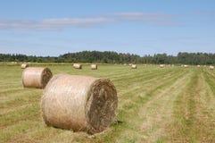 Hay bales. Royalty Free Stock Photography