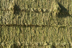Hay Bales. Side view of square bales of fresh alfalfa hay Stock Photo