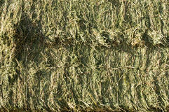 Hay Bales. Side view of square bales of fresh alfalfa hay Stock Photography