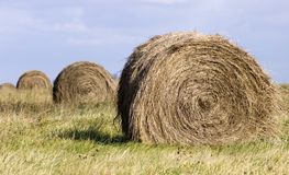 Hay Bales. Four round hay bales shot against a blue sky Stock Images