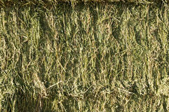 Hay Bales. Side view of square bales of fresh alfalfa hay Stock Image