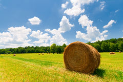 Hay Bales. In a green field with cloudy skies Stock Image