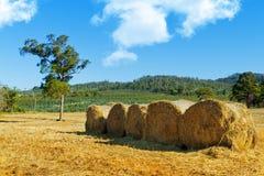 Hay bales. On rural Tasmanian farm stock photos