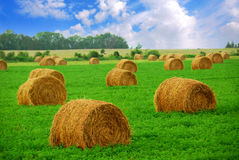 Free Hay Bales Stock Images - 2131924