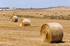 Hay bales. Dozen of hay bales in the country of Apulia, Italy Royalty Free Stock Image