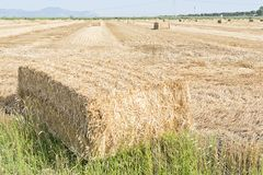 Hay bales Stock Image