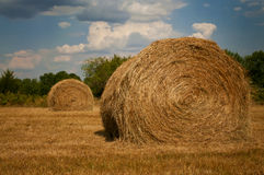 Hay bales. Two grass hay bales in a hay field Royalty Free Stock Photos