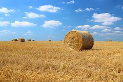 Hay bales. In the field with blue sky and small clouds royalty free stock photos