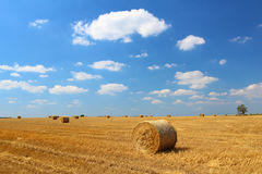 Hay bales. In the field with blue sky and small clouds royalty free stock photo