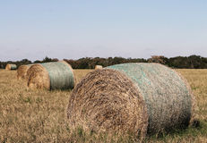 Hay bales. On the field Stock Photography