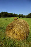 Hay Bales. Rolled hay bales in a field of green grass Stock Image