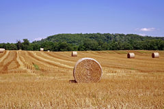 Hay Bales. In a Golden Field Against a Blue Sky Stock Photo