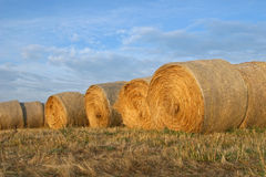 Hay Bales. A line of hay bales against the sky in the evening light Royalty Free Stock Photo