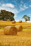Hay Bales. In field with summer sky stock photo