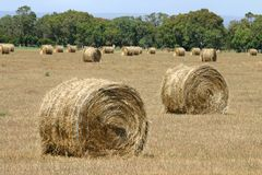 Hay bales. Standing ready to be collected. South Australia Royalty Free Stock Photography