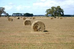 Hay bales. Standing ready to be collected. South Australia Royalty Free Stock Images