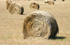 Hay bales. Standing ready to be collected. South Australia Stock Photos