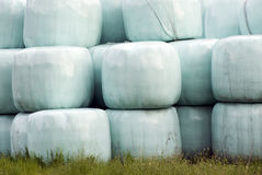 Hay bales. Plastic wrapped round hay bales Stock Images