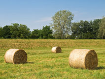 Hay bales. On a field during sunny day Stock Photography