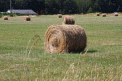 Hay Bales. Round bales of hay in a pasture with green grass sprouting royalty free stock photo