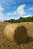 Hay bales. (or haybales) in stubble field under fluffy skies royalty free stock image