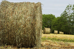 Hay bales. In close-up Royalty Free Stock Photo