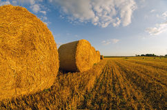 Hay bales on agricultural field after harvest in summer Royalty Free Stock Images