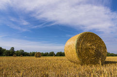 Hay bales. Agricultural landscape and hay bales Stock Photo