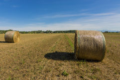 Hay bales. Agricultural landscape and hay bales Stock Photos