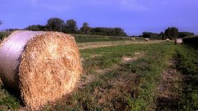 Hay bales stock video footage