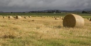 Hay Bales, Atherton Tableland. Atherton Tableland, North Queensland – April 2017: Hay bales in a mown paddock on the Atherton Tableland, Far North Queensland Stock Image