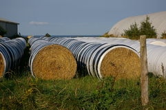 Hay bales and barn 4. Rows of hay bales on a farm Stock Image