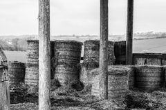 Hay bales in barn Royalty Free Stock Photo