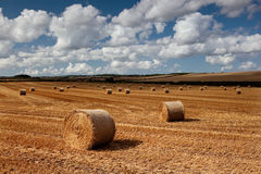 Hay bales, Bere Regis, Dorset, UK Royalty Free Stock Photos