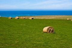 Hay Bales on coast - New Zealand Royalty Free Stock Photo