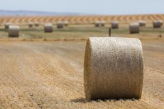 A field of hay bales royalty free stock photography