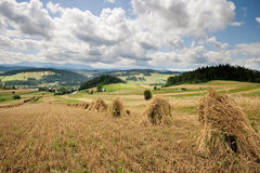 Hay bales in countryside. Scenic view of hay bales receding in countryside meadow with blue sky and cloudscape background Royalty Free Stock Images