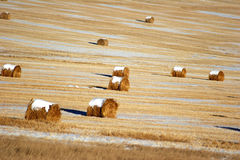 Hay bales in countryside. Scenic view of circular hay bales in countryside field Stock Images