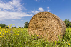 Hay bales. Countryside and hay bales Stock Photography