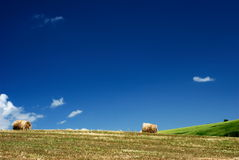 Hay bales in countryside. Scenic view of hay bales in countryside field with blue sky and cloudscape background stock photo