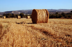 Hay bales in countryside Royalty Free Stock Image