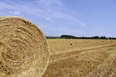 Hay bales in countryside Stock Photo