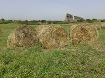 Hay bales in the countryside Stock Photos