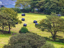 Hay bales for gathering in Royalty Free Stock Photography