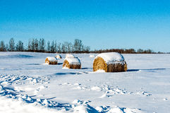 Hay Bales Covered in  Snow Royalty Free Stock Photography